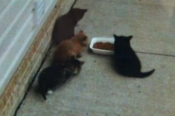 kittens-shot